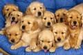 Numero verde per cani abbandonati