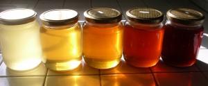 miele-varietà